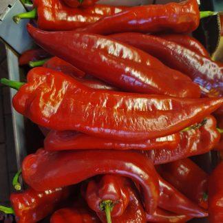 romano peppers