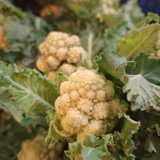 white sprouting broccoli